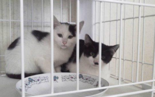 十夢の会 兄弟子猫二匹 飼い主さんが見つかりました。
