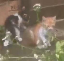 嘉穂郡桂川町瀬戸の子猫3匹の里親募集