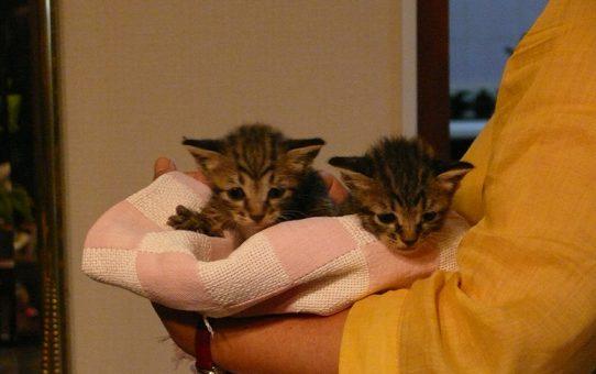 浮橋猫ちゃん 里親になって頂けませんか。