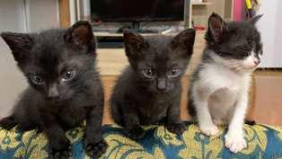 子猫達の里親を募集